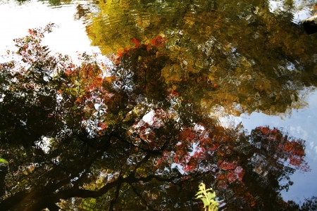 Koi pond autumn landscape photo