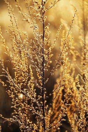 野草: Autumn Wild Grass