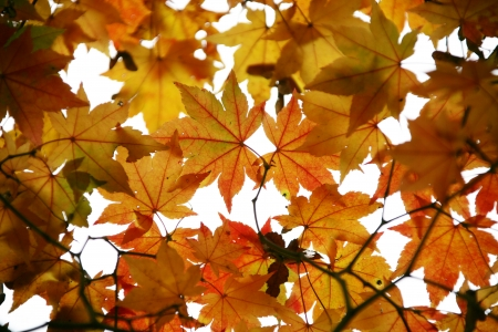 Autumn landscape with temples in south korea, Baegyangsa photo