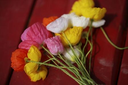 poppy flowers: poppy flowers