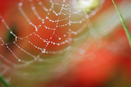 Spider s web,water drop photo