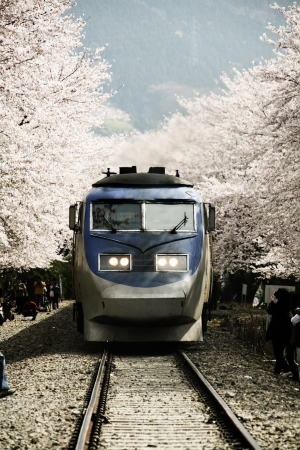 Cherry Blossom Festival in South Korea,gyeonghwayeok