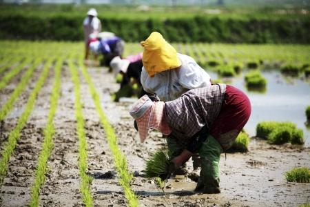 韓国農村景観の農家