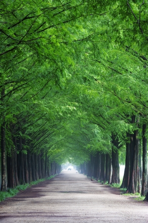 South Korea beautiful green forest trails Damyang