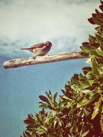 sky brunch: Bird on brunch Stock Photo