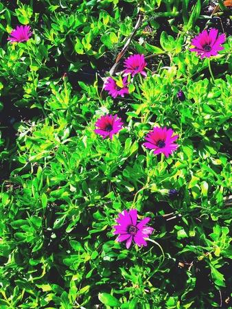 purple flower: Blooming pink purple flower wallpaper Stock Photo