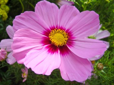 背景が緑色の美しいピンク花フラワー 写真素材