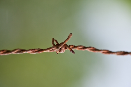 Barbed wire with grey background photo