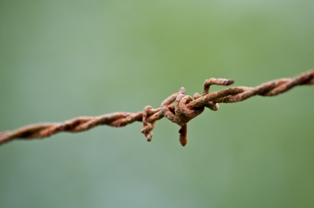 Barbed wire with green background photo