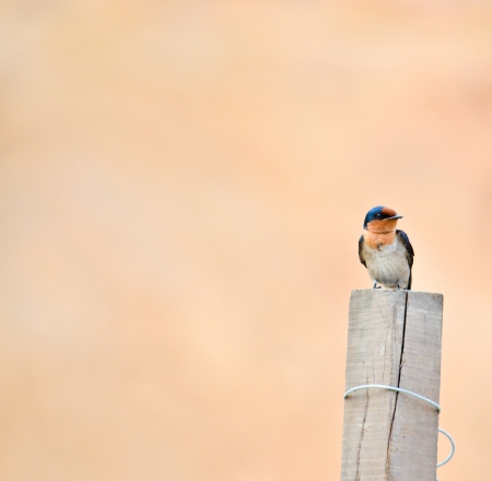 Bird sit on wood with orange background photo