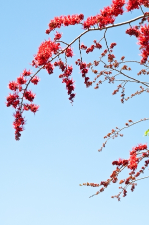 Red flower with blue sky background