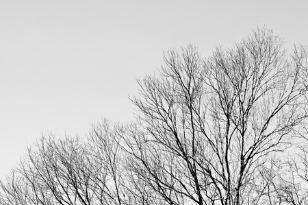 Tree with grey sky background photo