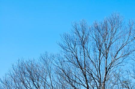 Tree with grey sky background photo