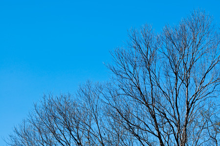 Tree with blue sky background photo