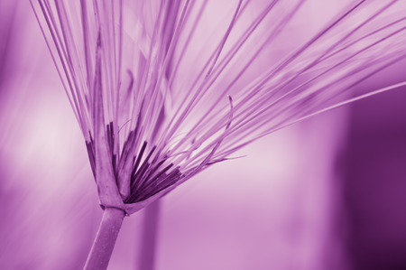 Grass with purple background