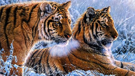 Closeup photo of tigers sitting in a forest & Snow fall Banque d'images - 137662098