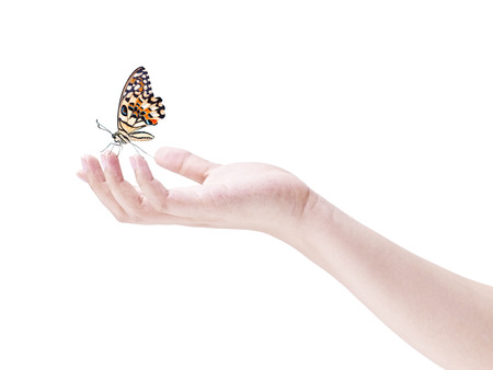 cradling: butterfly landing on the fingers of a human hand, isolated on white background.