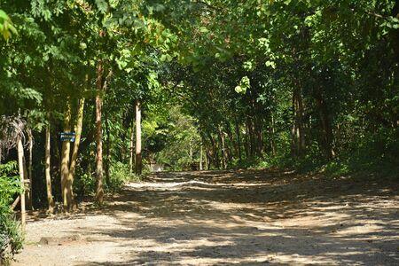 Calinawan road with surrounding trees along the way in Tanay, Rizal 写真素材