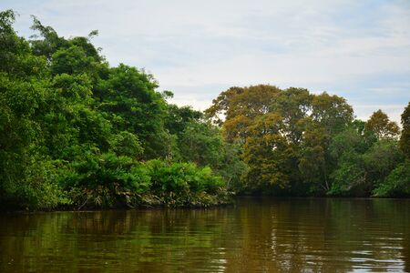 Klias river is a Mangrove Forest Reserve and a ecotourism destination wherein you can see proboscis monkey in the trees.