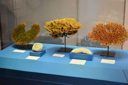 MANILA, PH - OCT 20 - National museum of natural history coral display on October 20, 2018 in Manila, Philippines.