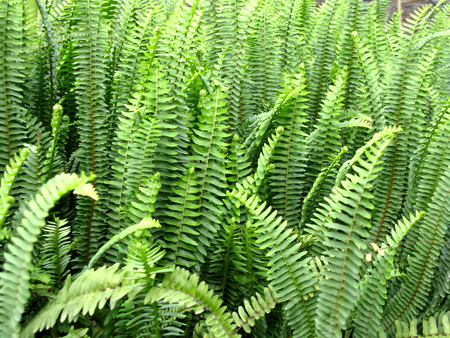 Forest fern leaves  photo