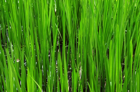 sprouted: New Green Sprouted Grass