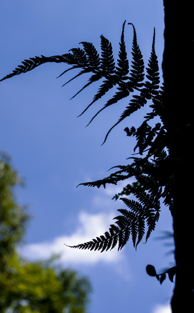 cucoloris of the fern on the cliff photo
