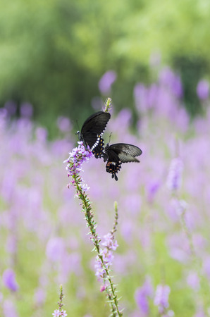 stay in green: Butterflies and lavender