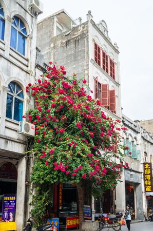 gules: Bougainvillea on Beihai Old Street