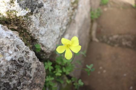 yellow flower in rock