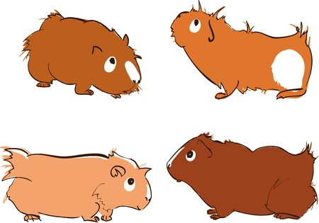 illustration of cute guinea pigs
