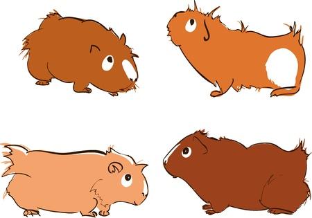 świnka morska: Ilustracja cute Å›winek