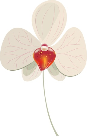 orchid branch: Illustration of Orchid Illustration