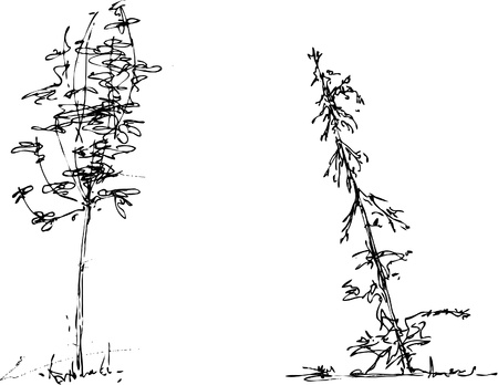 pencil plant: illustration of sketchy trees
