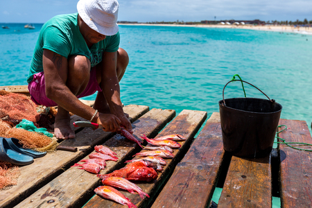 Fisherman with colorful fish on a wooden pier in Santa Maria, Sal, Cape Verde, Cabo Verde Stock Photo