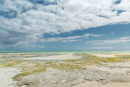 Amazing wide view of low tide on Indian Ocean