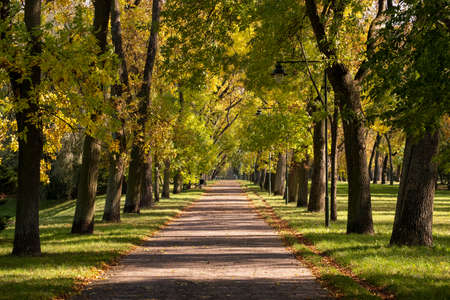 Late summer in park, with green lawn, first yellow leaves on trees and nice path Stock Photo
