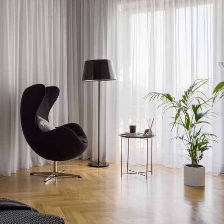 Black and comfortable armchair in bright room with white window curtains, wooden floor and houseplants