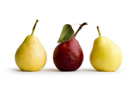 Red and Yellow pears on white background photo