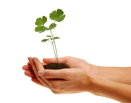 Woman?s hands holding young plant Stock Photo