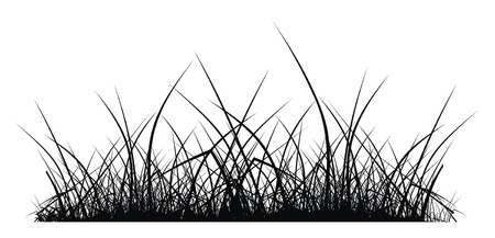 vector silhouette of grass on white background Vector