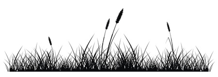 vector silhouette of grass on white background Stock Vector - 2160354