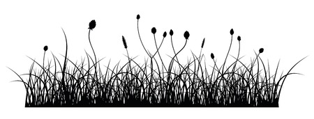 vector silhouette of grass on white background Stock Vector - 2190790