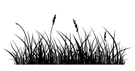 vector silhouette of grass on white background