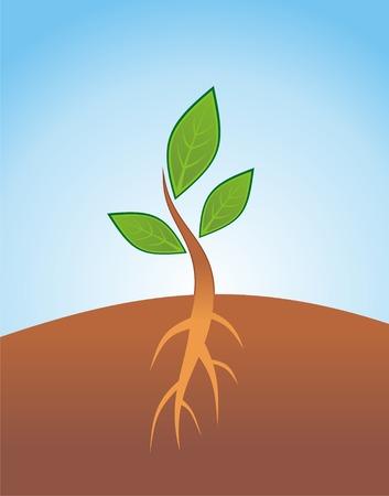 Poco brote con la hoja y la raíz verdes Ilustración de vector