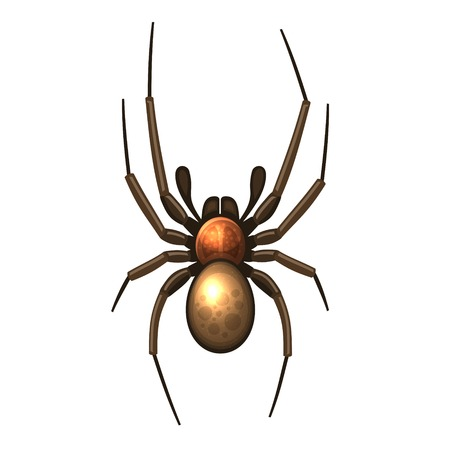 latrodectus: Spider. Vector isolated illustration on white background.