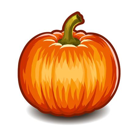Pumpkin isolated on white background. Vector illustration. illustration
