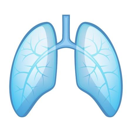 Pulmões e brônquios da saúde humana. Ilustração vetorial