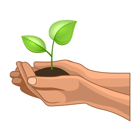 saplings: Hands and Plant on White Background. Vector Illustration