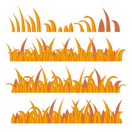 sedge: Autumn Grass Constructor on White. Vector illustration